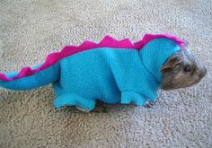 would it be weird if i made my guinea pig a Halloween costume?