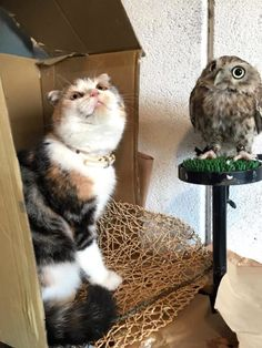 A Kitten Became BFF With An Owlet And Their Friendship Is A Hoot