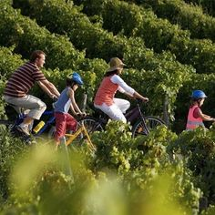 20km bike ride in the middle of the stunning St. Emilion vineyards #Bordeaux  #wine