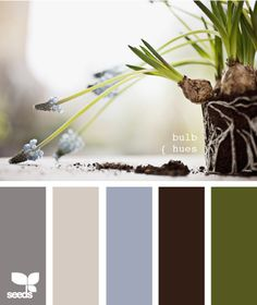 """Bulb Hues"" Palette by Design Seeds Colour Pallette, Color Palate, Colour Schemes, Color Combos, Wall Colors, House Colors, Paint Colors, Design Seeds, Living Room Colors"
