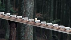 CLICK THROUGH - Japanese Gravity Marimba Plays Bach in an Ancient Forest: Beautiful video of a single wooden ball rolling down over a stepped wooden ramp for two minute playing Bach's 'Jesu, Joy of Man's Desiring' via makezine.