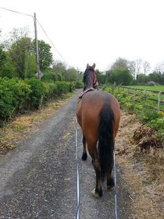 10 Ways to Bond With Your Horse - Horse Boots, Hoof Boots, Saddle Pads & Equipment Horse Riding Tips, Horse Tips, Riding Gear, Horse Boots, Horse Horse, Horse Stalls, Dressage, Horse Exercises, Horse Training