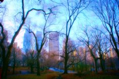 New York, Central Park, Trees, Green, Blue, Sky, Buildings, Colour, Wall Art, Home Decor by PhotosbyAnnaMarie on Etsy https://www.etsy.com/listing/230386334/new-york-central-park-trees-green-blue