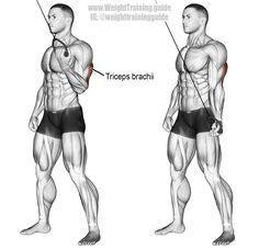 Cable One-Arm Reverse-Grip Triceps Push-Down Exercise Triceps Workout Beast Mode Forma Fitness, Estilo Fitness, Fitness Gym, Muscle Fitness, Fitness Motivation, Biceps And Triceps, Triceps Workout, Workout Guide, Workout Challenge
