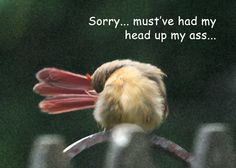 Sorry card / I am sorry / Apology / Mea culpa - Funny greeting card by Belvidesigns