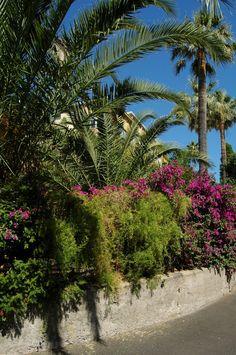 Bordighera (IM)  Via dei Giardini