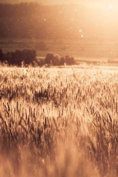 Fields of Gold by Florian Wardell