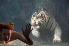 underwater, art numérique - PINSOLLE - Picasa Albums Web Underwater Art, Albums, Digital, Animals, Picasa, Animales, Animaux, Animal, Animais