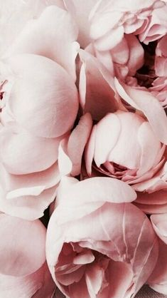 Super Ideas For Flowers Wallpaper Iphone Florals Inspiration Amazing Flowers, Love Flowers, My Flower, Flower Art, Paper Flowers, Dried Flowers, Flower Power, Flowers Bucket, Peony Flower
