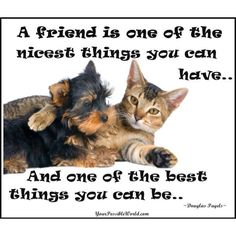 40 Adorable Photographs Revealing the Forever Friendship of Cats and Dogs Real Friends, Dog Friends, Pomes, Homeless Dogs, Friend Friendship, Friendship Quotes, France, Yorkshire Terrier, Make You Smile