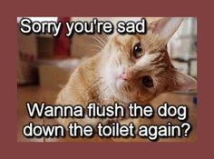 Wanna Flush The Dog Down The Toilet Again?