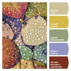 Paint colors from ColorSnap by Sherwin-Williamsj