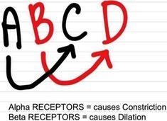 Alpha & Beta Receptors | *Nursing pharm* | Pinterest