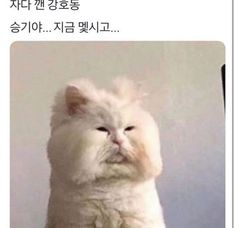 Kang Hodong eating and eating ramen 라면먹고 잔 강호동 Cute Baby Cats, Cute Funny Animals, Funny Animal Pictures, Cute Baby Animals, Animals And Pets, Funny Cats, I Love Cats, Cool Cats, Cat Icon