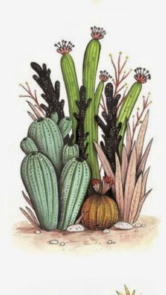 Succulents Drawing, Cactus Drawing, Watercolor Succulents, Floral Watercolor, Watercolor Paintings, Cactus Decor, Cactus Art, Cactus Pictures, Cactus Illustration