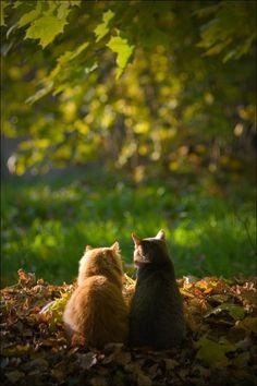 二匹の猫 黄昏か?愛を語り合っているのだろうか