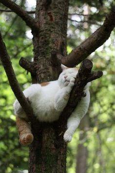 "Cat nap... in the ""Cottage"" garden"