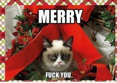 Happy Holidays from Grumpy Cat. - Grumpy Cat - Ideas of Grumpy Cat - Happy Holidays from Grumpy Cat. I'm pretty sure I already pinned this but oh well! it's grumpy cat! The post Happy Holidays from Grumpy Cat. appeared first on Cat Gig. Funny Christmas Songs, Xmas Songs, Funny Xmas, Christmas Humor, Merry Christmas, Christmas Vacation, Christmas Music, Xmas Music, Christmas Quotes