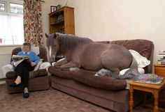 Wow....too cute...she loves her horse!