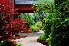 Courtyard Design & Informal Garden.  Lush Colorful Garden Design.  Landscape Architectural Design.  Landscape Design.
