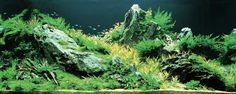 Top 10 aquascapes in 2008 ADA Aquatic Plants Layout Contest - 6th Place