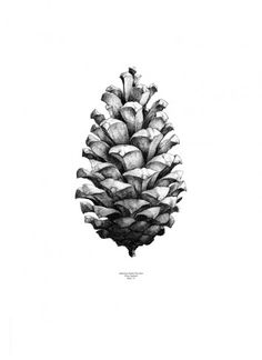 Form us with love, Pine cone White by Paper Collective | Poster from theposterclub.com