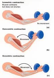 Muscular Strength - type of contraction, eccentric contraction produces the greatest force, then the isometric contractions which means there is no change in the muscular length and then then concentric contraction with is the shortening of the muscle.