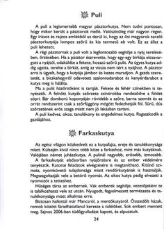 MESÉLŐ SZÖVEGÉRTÉSI MUNKAFÜZET 2. OSZTÁLY - tanitoikincseim.lapunk.hu Grammar, Teaching, Writing, School, Dyslexia, Rain, Languages, Education, Being A Writer