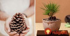 Voňavý experiment u vás doma: Ako si vypestovať mini stromček zo šišky? Terrarium, Diy And Crafts, Planter Pots, Gardening, Mini, Experiment, Flowers, Plants, Decor