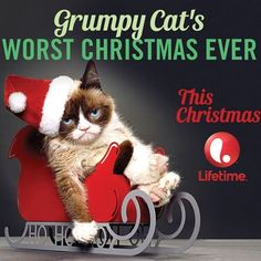 Christmas in July: Grumpy Cat Gets A Movie Deal  ... see more at PetsLady.com ... The FUN site for Animal Lovers