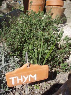 On dit plein de belles choses sur les bienfaits du thym, un véritable tonique et un antiseptique efficace. Riche en huile essentielle, délicieux en cuisine où il sert à parfumer les mets, il possède de nombreuses propriétés thérapeutiques. L'infusion de thym est recommandée pour soulager la congestion nasale. . Boire trois à cinq tasses de tisane de thym par jour pourrait soulager des symptômes du rhume et calmer la toux.