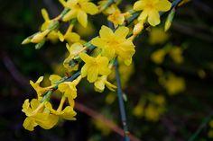 Ajánljuk: Melyek a legszebb téli virágok?, http://kertinfo.hu/melyek-a-legszebb-teli-viragok/, ezekben a témakörökben:  #Augusztusi #Kert #Mag #Téli #Virág, írta: Édenkert.hu