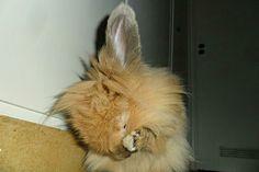 Bunny world wide, my bunny, Rubi bunny