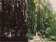 Lisa & Z's Forest Wedding in Nestledown in Los Gabos