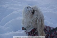 Our dog, Juliette. She looks like me when I was a kid, trying to catch a snowflake on the tongue. I figured I'd post this as the holiday season is upon us! Heart Photography, Kid, Holiday, Dogs, Animals, Animales, Vacations, Animaux, Child