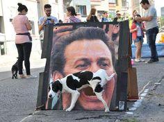 Le 44 migliori foto scattate al momento GIUSTO. Non Avevo Mai Visto Un Cane Con Quella Faccia