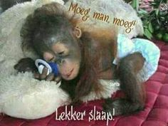 Adorable Cute Little Baby orangutan Sleep-Time - Precious! Primates, Cute Baby Animals, Animals And Pets, Funny Animals, Baby Orangutan, Cute Monkey, Tier Fotos, Cute Animal Pictures, Cute Creatures