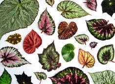 """@jungle_________ publicó en su perfil de Instagram: """"Las #hojas exóticas son sin duda nuestra gran obsesión. Todas son de una especie llamada…"""""""