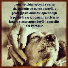 Chi accoglie un animale. Beautiful Creatures, Animals Beautiful, Dog Phrases, Dog Friends, Best Friends, Feelings Words, Dog Memes, Rottweiler, Beautiful Words