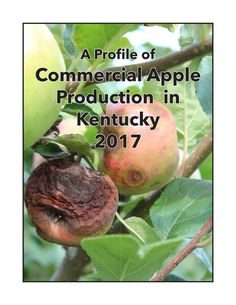 A Profile of Commercial Apple Production in Kentucky 2017  Apple production in Kentucky is small, from less than 1 acre to just over 40 acres, yet profitable. Cash value of Kentucky apple production is valued at $24.4 million to $40.6 million per year. Apple orchards are distributed throughout Kentucky, and play an important role in providing access to local foods. Garden Solutions, Apple Orchard, Orchards, Kentucky, Acre, Sick, Commercial, Public, Backyard