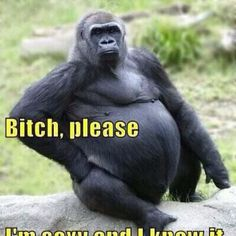 cac364465abc57007224cf1bcbe33b70 animals what if this gorilla was named rose!? yeesh she really let herself
