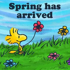Spring has arrived. - Woodstock of Peanuts. Peanuts Cartoon, Peanuts Snoopy, Cartoon Fun, Peanuts Comics, Charlie Brown Christmas, Charlie Brown And Snoopy, Snoopy Love, Snoopy And Woodstock, Snoopy Pictures