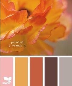 Petaled orange Palettes Color, Colour Pallette, Color Palate, Colour Schemes, Color Combos, Color Patterns, Orange Palette, Pantone, Design Seeds