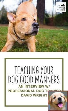 House Training A Puppy In Apartment And Dog Behavior Digging The Carpet Dog Training Training Your Dog Dog Trainer