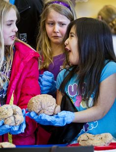 photo by Mike Siegel of Seattle Times Jillian Lykins, left, Maddie Iseminger, and Citlalli Cornejo, fourth graders at Immaculate Conception School in Everett, react after handling a human brain. They were among 700 students attending a University of Washington event as part of Brain Awareness Week. The students learned about the brain through hands-on stations and a lecture by Eric H. Chudler, a research associate professor in the UW Department of Bioengineering.