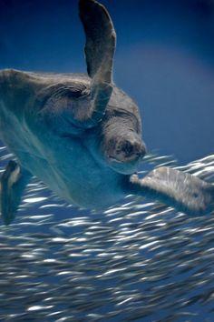 Sea Turtle by Monterey Bay Aquarium