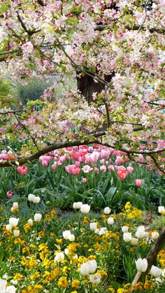 monet malereien im garten Frühling in Monets Garten in Giverny Claude Monet, Spring Blooms, Spring Flowers, Beautiful Gardens, Beautiful Flowers, Spring Scenery, Foto Poster, Cottage Garden Plants, Monet Paintings