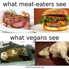 """130 Likes, 2 Comments - roots of compassion (@rootsofcompassion) on Instagram: """"#thetruthaboutmeat #isso #carnism #meat #whatveganssee #govegan #animalrights #rootsofcompassion"""""""