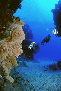 "Not far from Tamarin you will be able to dive in Flic en Flac. ""The cathedral"" is a favourite for experienced divers. The waters of Mauritius."