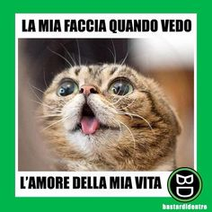 I hope you want to some laugh by using some decent memes. Now we have a great collection of some Mean Cat Memes that are so decent type memes.I'm sure it will make you laugh and happy for whole day. Mean Cat Memes Mean… Silly Cats Pictures, Funny Pictures Can't Stop Laughing, Funny Photos, Funny Images, Funny Cat Compilation, Funny Animal Videos, Videos Funny, Funny Animal Memes, Funny Cats